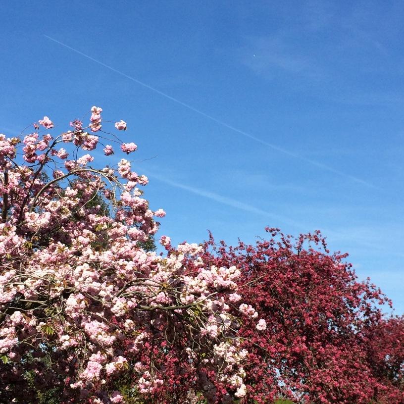 Blossom in Bristol